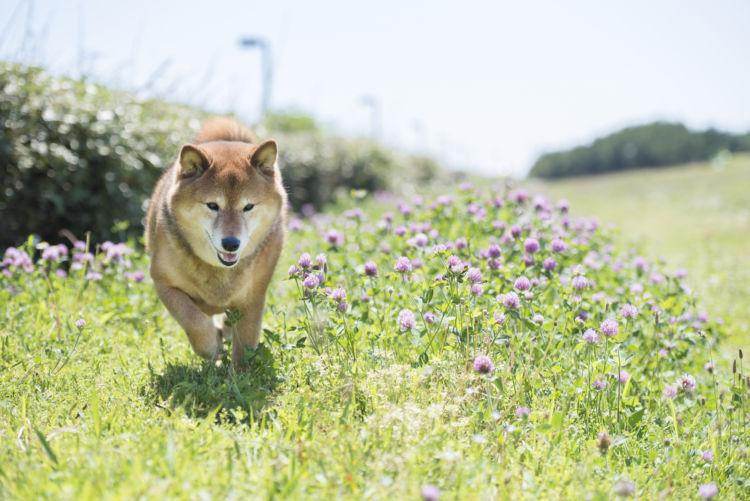 愛犬が健康な生活