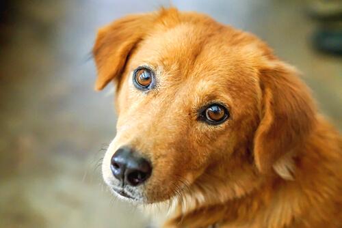 犬のストレスを発散させるために飼い主ができる、4つのこと