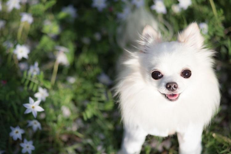 愛犬との健康で楽しい生活