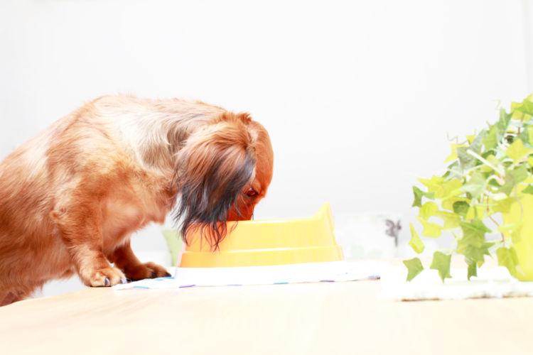 犬がキャベツを食べても大丈夫!