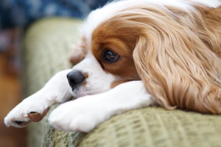 犬用ガムの種類①【おやつ用ガム】留守番やトレーニングのご褒美に!