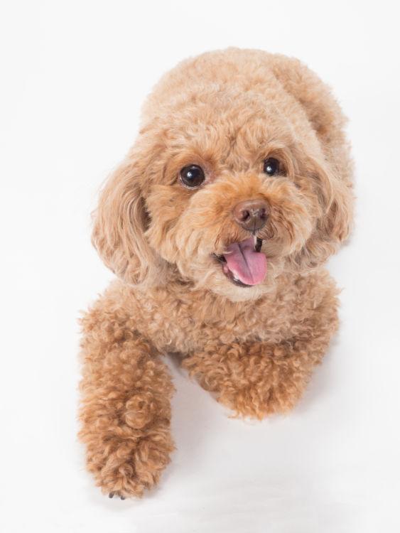 初めて犬用ガムを食べる犬