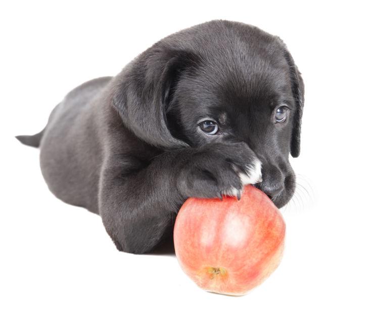 愛犬の健康に役立つ「りんご」まとめ