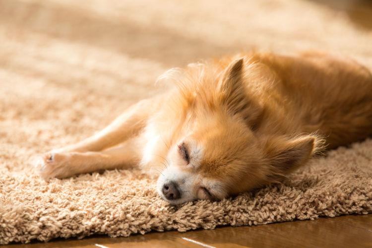 愛犬に生肉を食べさせる時の適量や注意点!食中毒のリスクは?