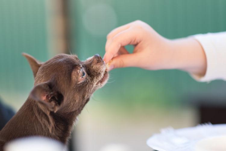 愛犬に生肉を与える際の注意点② 「はじめは少量から」
