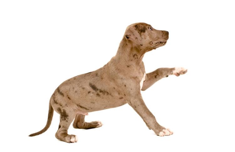 犬の前十字靭帯断裂【症状】