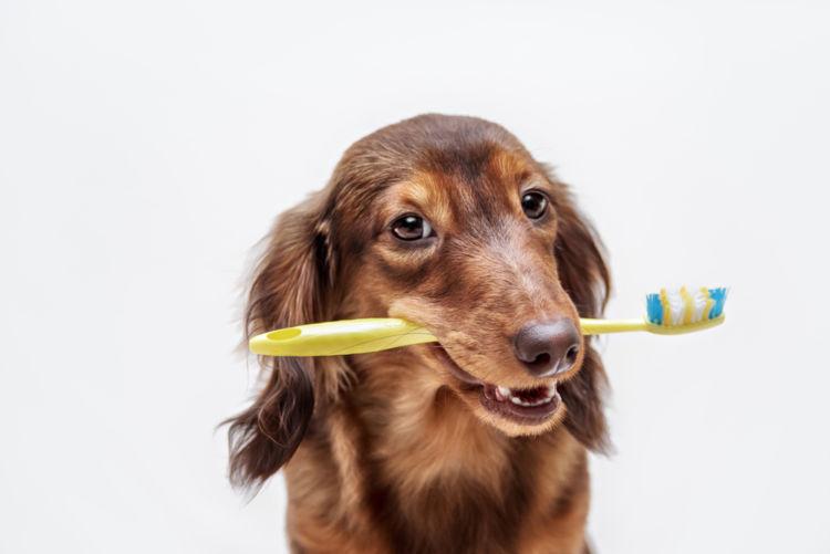 犬の歯髄炎と間違えやすい病気
