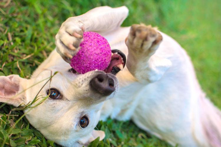 犬の歯髄炎【予防対策】