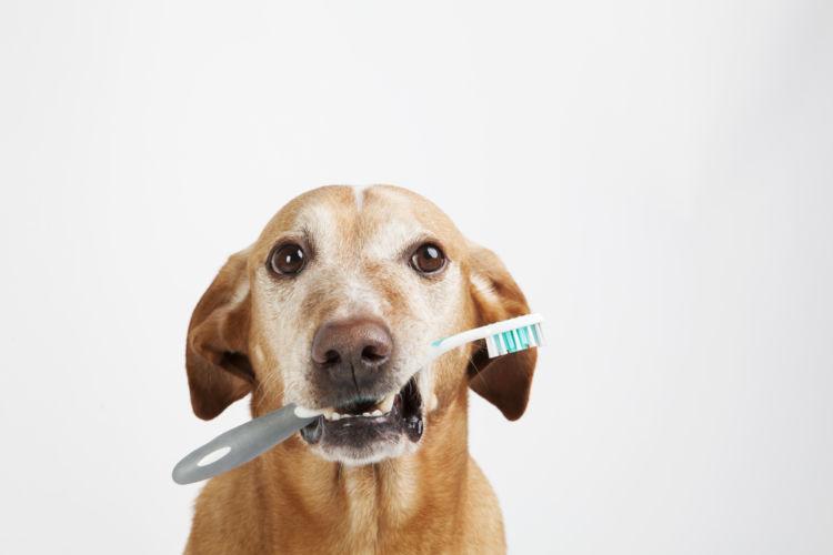 犬の口腔鼻腔瘻【予防対策】