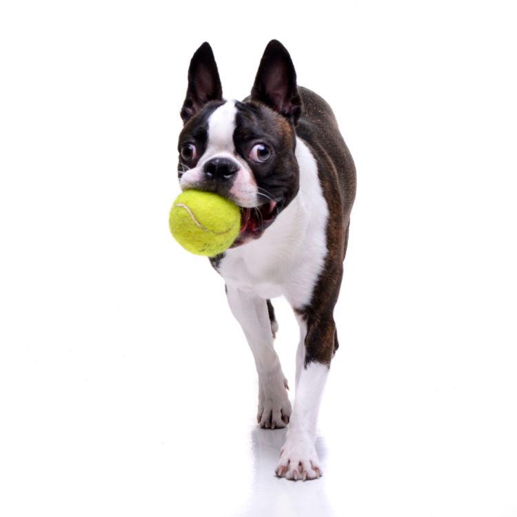 【獣医師監修】「犬の歯周病」原因や症状、なりやすい犬種、治療方法は?