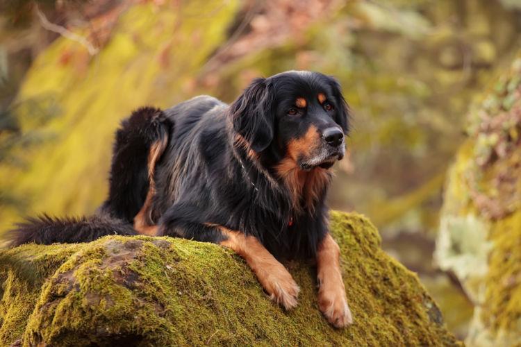 犬の歯周病【発症しやすい犬種】
