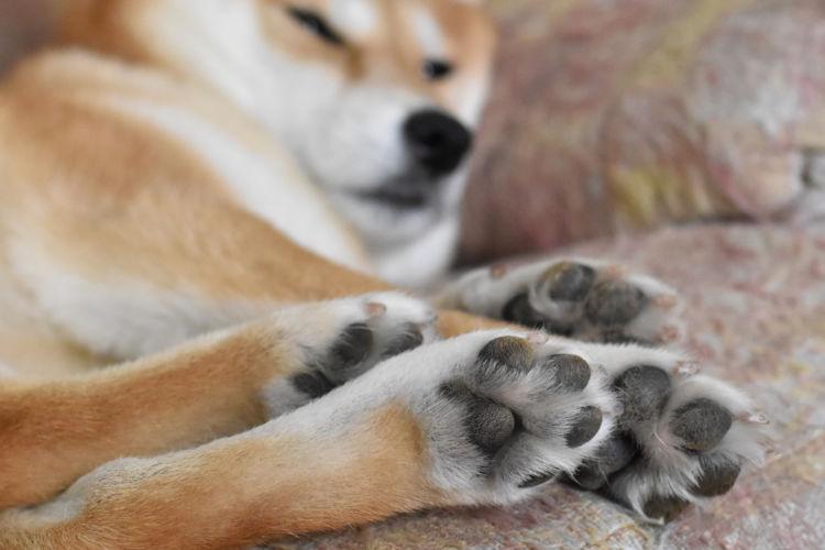犬も猫もイカを食べると腰を抜かす!?