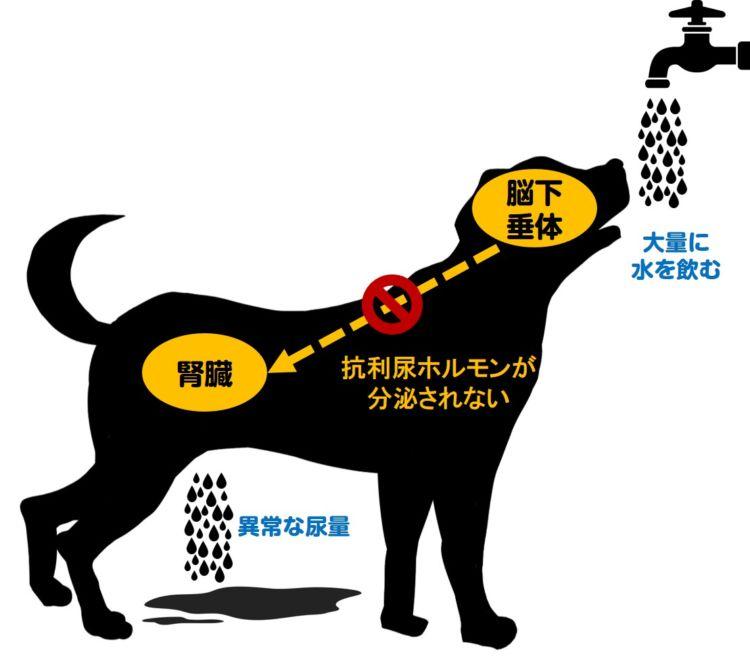 犬の尿崩症とは