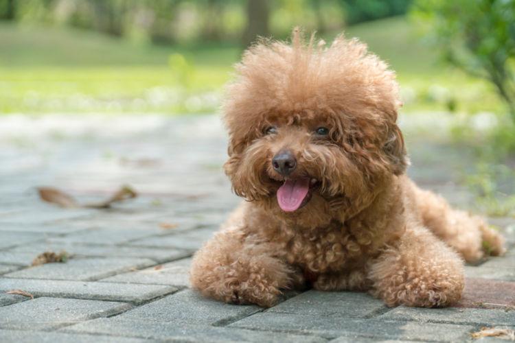 犬の尿崩症【原因】