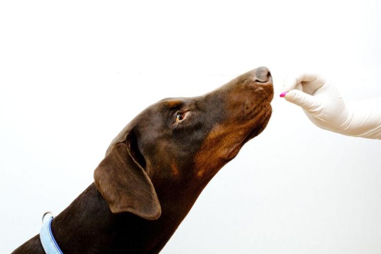 犬の尿崩症【治療方法】