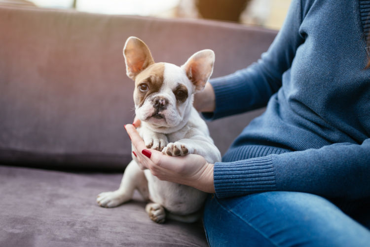 犬の尿崩症【予防対策】
