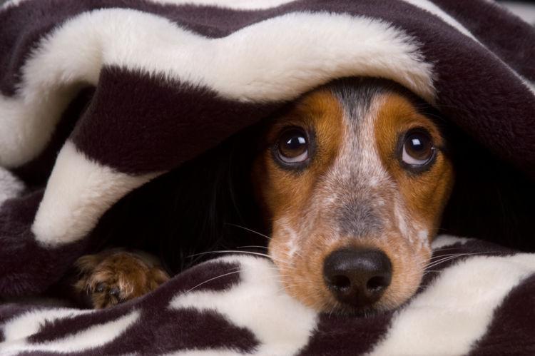 犬の尿崩症と間違えやすい病気