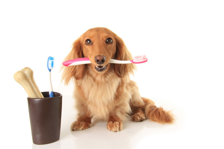 犬の悪性黒色腫(メラノーマ)【予防対策】