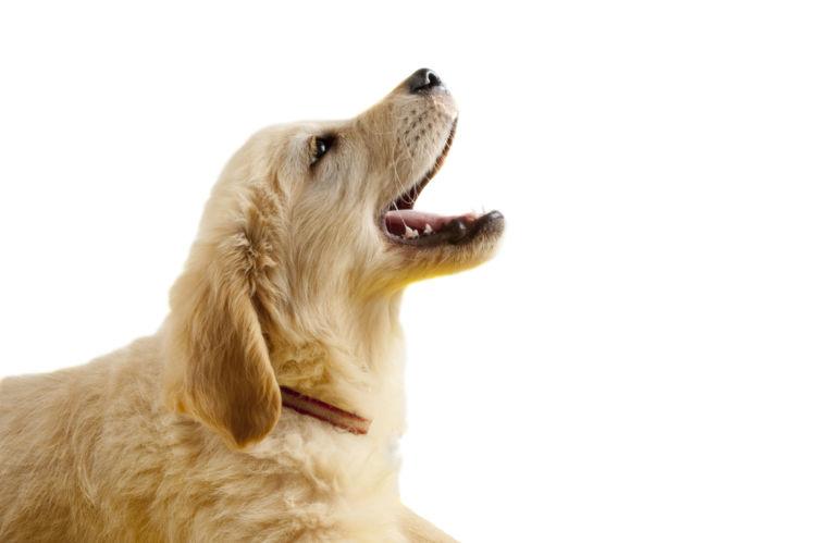 犬の悪性黒色腫(メラノーマ)と間違えやすい病気