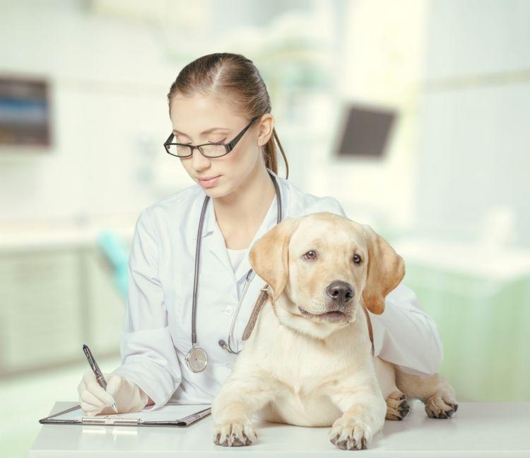 犬の血管肉腫【予防対策】