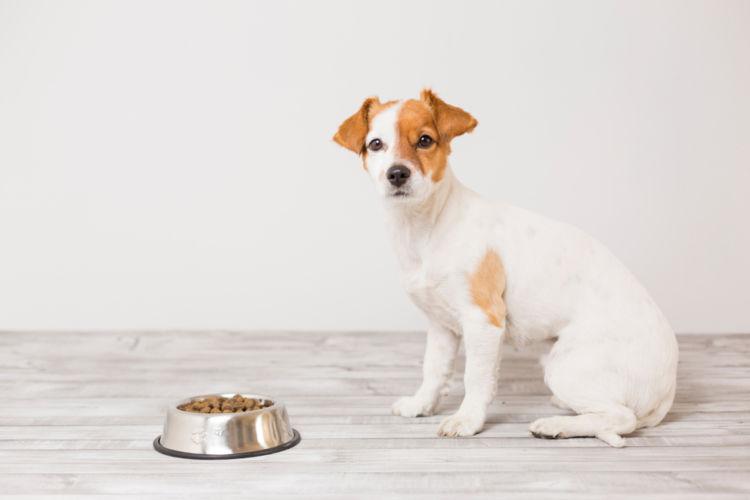 犬の線維肉腫【症状】