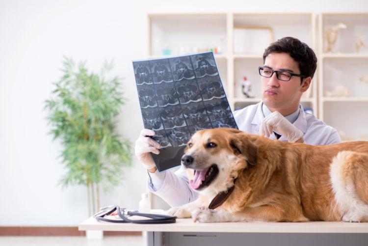 線維肉腫の進行度の診断