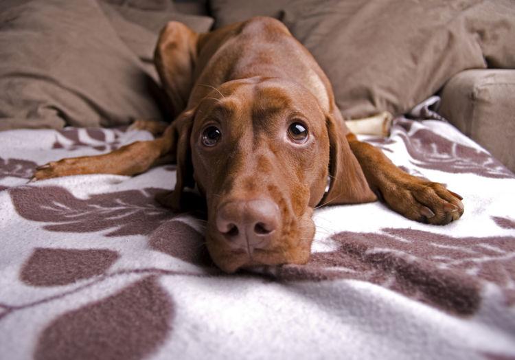 「コーングルテン」は犬がアレルギーになりやすい?