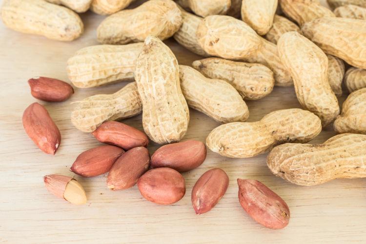 【獣医師監修】犬がピーナッツを食べても大丈夫?アレルギーや中毒性は?殻や薄皮はダメ?