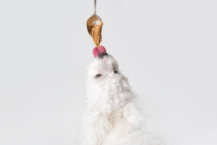 愛犬にピーナッツバターを与えても大丈夫?