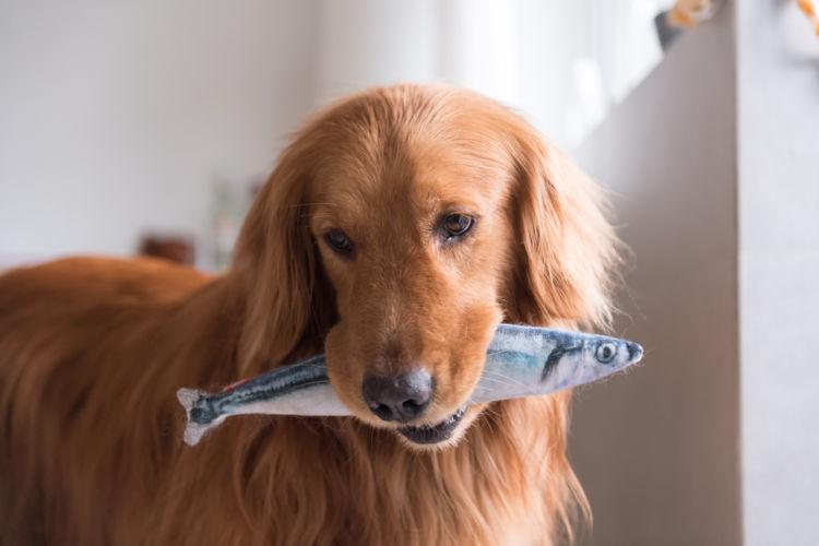 肉が好きな犬に魚を与えるメリットは?