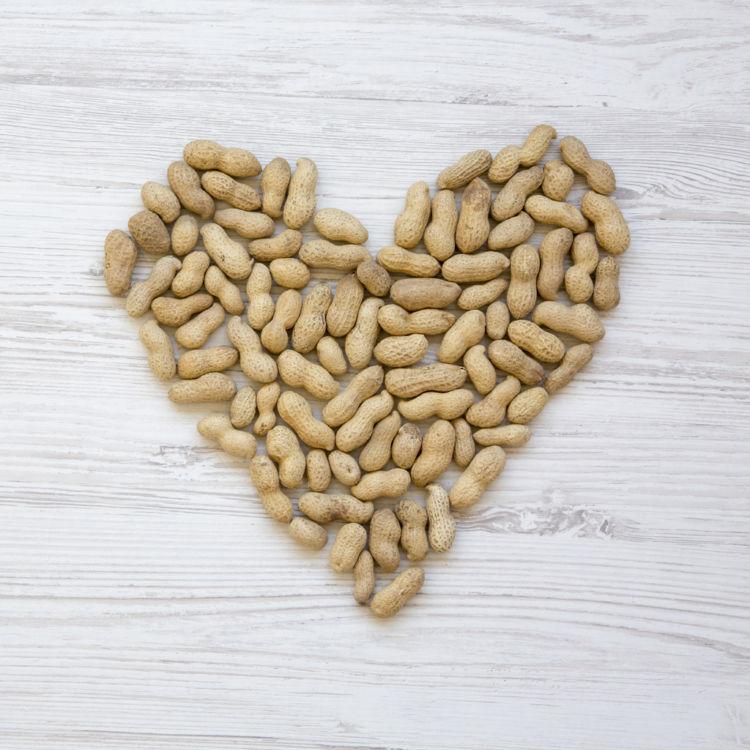 愛犬に与える「ピーナッツ」のまとめ