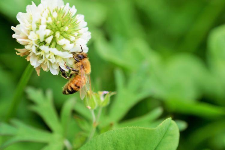 愛犬にはちみつを与える際は、花粉などの「アレルギー」にも注意!