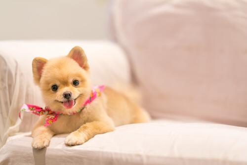 「犬は飼い主にしゃべり掛けている」。鳴き声を理解すれば愛犬の気持ちがもっと身近に