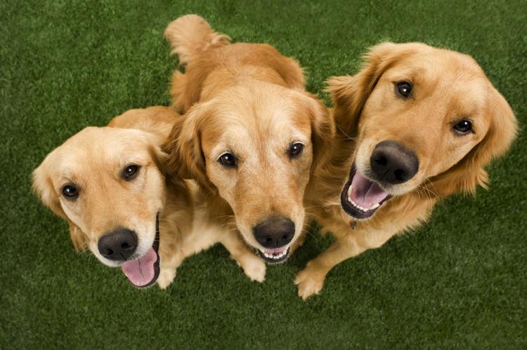 愛犬の健康を守る食生活