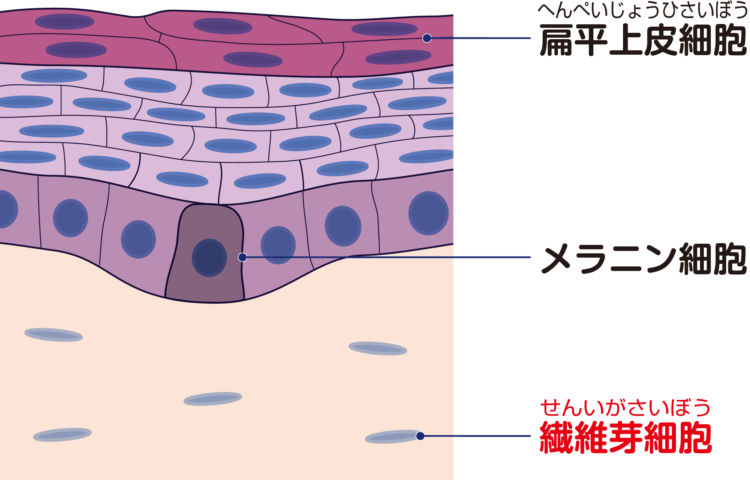 犬の線維肉腫【原因】