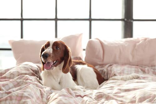 犬を自由に部屋で飼いたい!犬の放し飼いで注意すべき4つのポイント