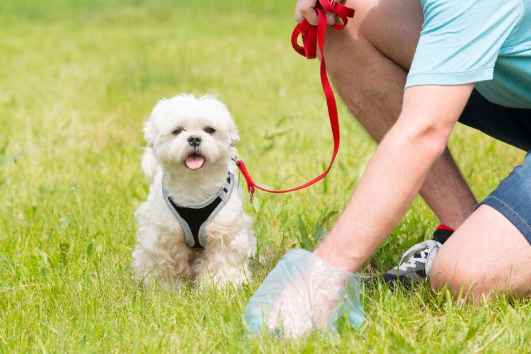 犬が下痢をした・うんちがゆるい【こんな症状は要注意!】