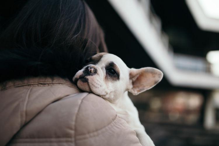 犬のリンパ節が腫れる【こんな症状は要注意!】