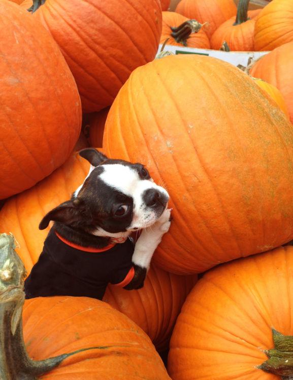 かぼちゃのメリット④「カリウム」