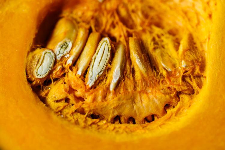 かぼちゃの注意点③「種は与えず、皮はすりつぶす」