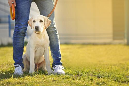 散歩で歩かない犬に効果的!散歩が大好きになるしつけ方法4選