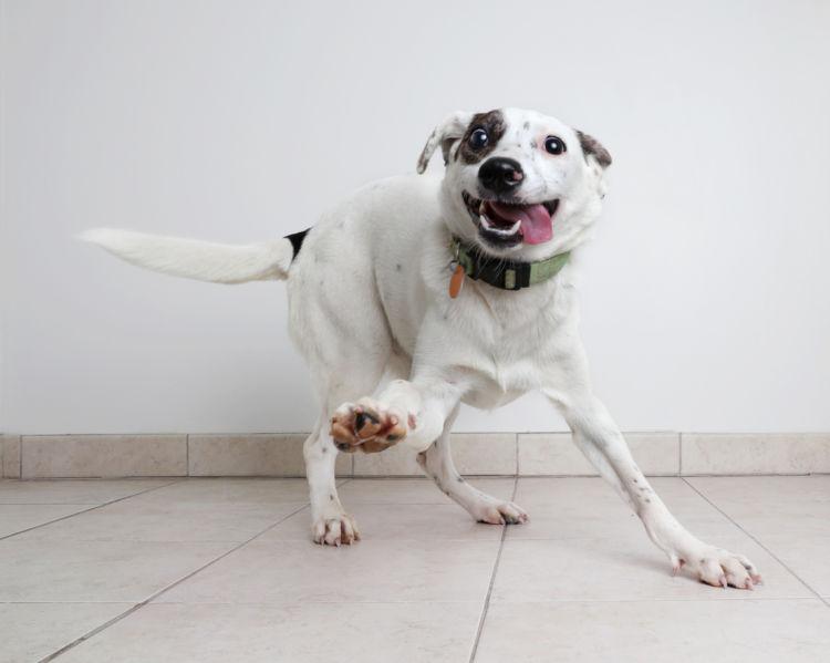 【獣医師監修】犬がてんかんになる原因や症状、対処法から治療方法、発症しやすい犬種は!?