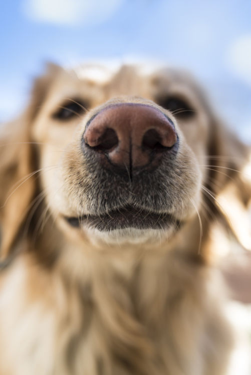 【犬が舐める理由】その②~気になる匂いがする!