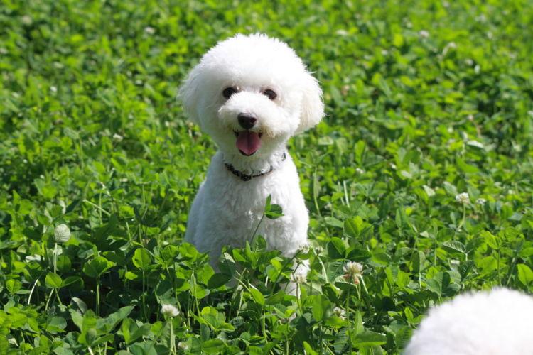 【獣医師監修】犬は何歳まで生きる?犬の寿命は小型犬と大型犬、大きさと犬種で変わる!?