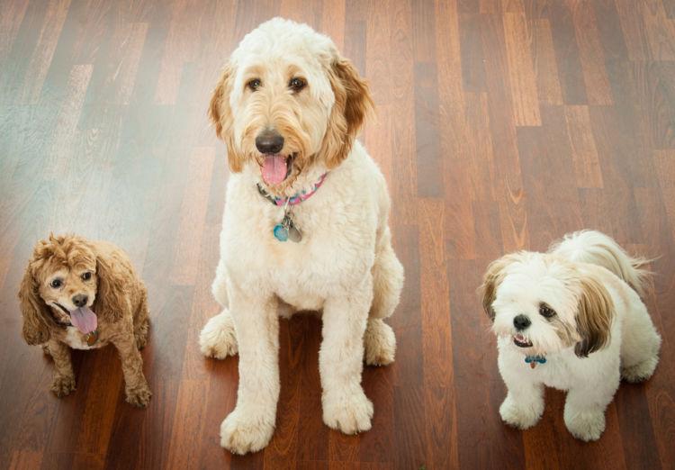 犬の寿命【大きさと犬種によって寿命は変わる】