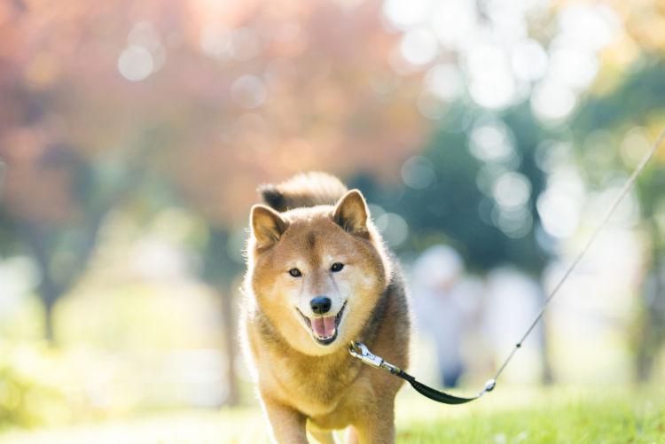 犬の寿命【犬種別ランキング】(参考表)