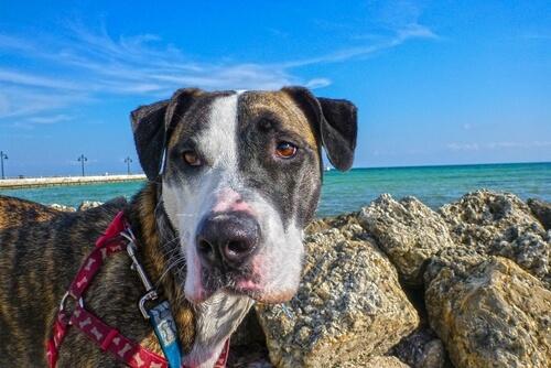 愛犬のおならが臭いときに考えられる、4つの原因