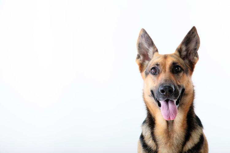 癌になりやすい大型犬