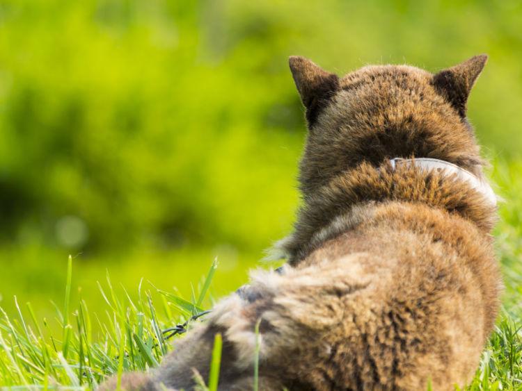 犬の寿命【日本の長寿犬ベスト3】