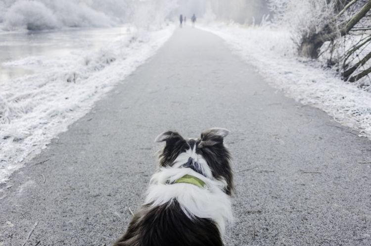 【獣医師監修】犬が死ぬ前に飼い主の側から離れる理由とは?死に際を見せたくない犬たち